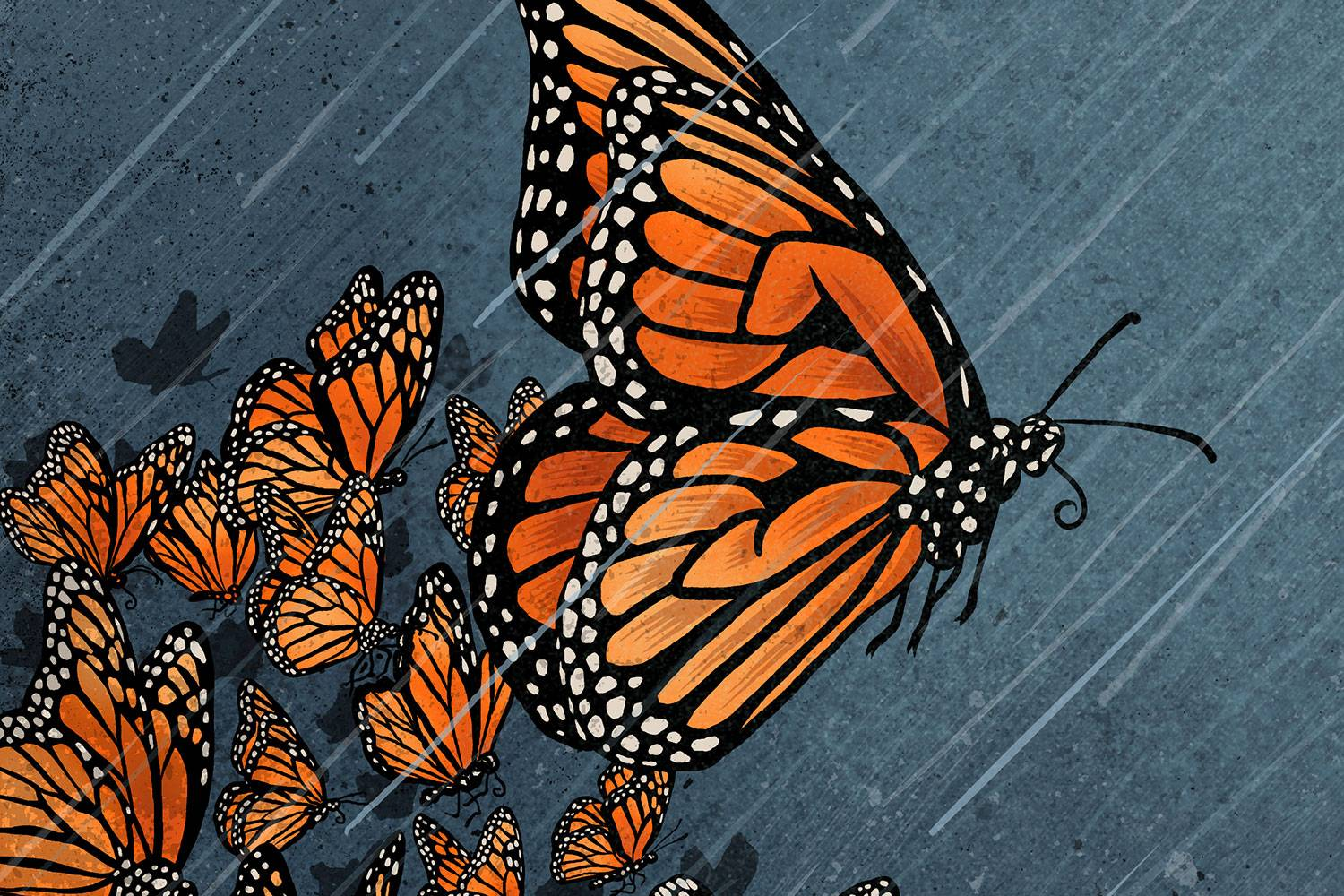 Monarch butterflies illustration