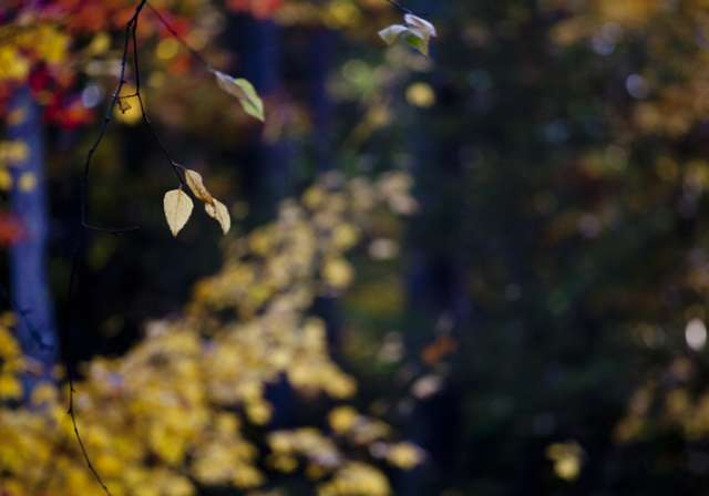 Fall-Scenic-Leaves-900-500.jpg