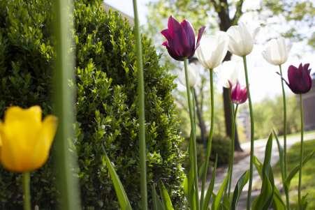 Tuck-Spring-Scenic-900-500.jpg