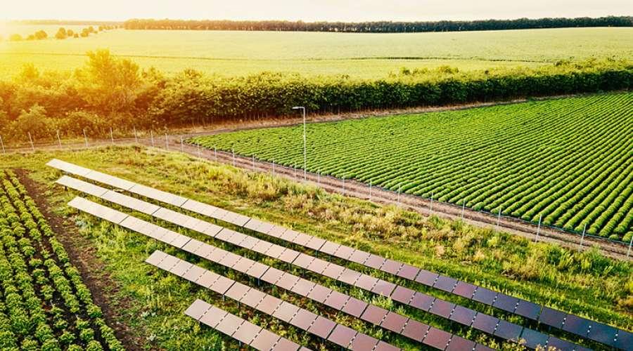 solar-panel-field.jpg