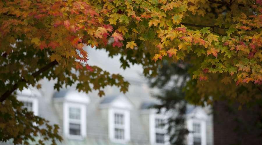tuck-in-fall.jpg